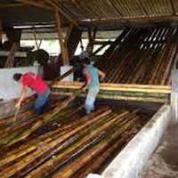 Bamboo Chemical Treatment Plant