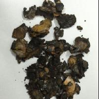 Cashew Shells