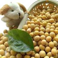 Organic Soybean Seeds