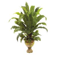 ornamental plants of punjab Available plants : ornamental plants, herbal plants,  punjab nursery - nursery id: 208 available plants : rhenium, junipers, hibiscus thailand, red,.