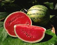 Watermelon Seed Kernel