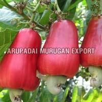 Fresh Cashew Apple