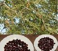 fruits tree seeds