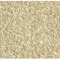 basmati golden rice