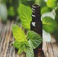 Pure Mentha Piprita Essential oil