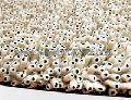Wool Shaggy Carpets