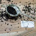 Brass Wire Mesh Tea stainless steel strainer