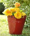 Decorative red indoor or garden planter