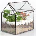HOUSE SHAPE GLASS PLANT TERRARIUM