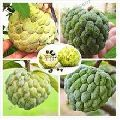Custard Apple seed