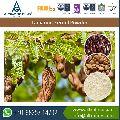 Tamarind Seed Gum Powder