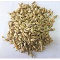 Deshi Bamboo Seed