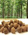 Treated Teak forestry tree Seed