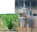 Extraction plant for Aloe Vera gel and juice