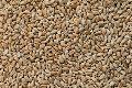 Organic Hard Wheat