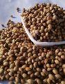 Badami Coriander Seeds
