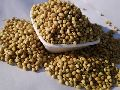 Scooter Coriander Seeds