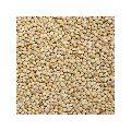White Millet Seeds