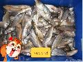 Frozen Golden Croaker Fish