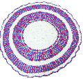 Multicolored Crochet Round Table Mat
