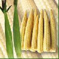 baby corn seed