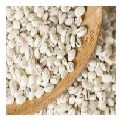 Pearl Barley Seeds