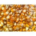 Yellow Maize Cattle Feed