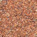 Maruthani Vithai Seeds