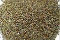 Pearl Millet Grains
