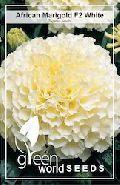Marigold Hybrid White Seeds