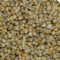 Non Clean Green Millets