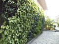 vertical gardens designing Service