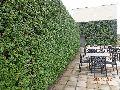 Vertical Garden Landscaping Services