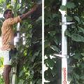Aluminium Tree Climbers
