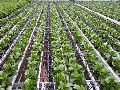 Global Drip Irrigation System