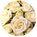 Organic White Rose