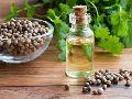 Coriander Natural Essential Oil