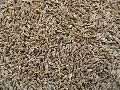 Fresh Organic Cumin Seeds