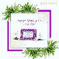 Kayasaa French Vanilla & Lavender Bath Soap