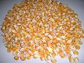 Human Feed Yellow Maize Seeds