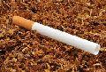 Filter Cigarette