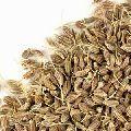 Brown Fennel Seeds