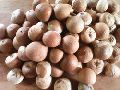 Indian Organic Areca Nuts
