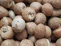 Indian Raw Organic Areca Nuts