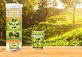 Gruner Green Tea Cup 10 pcs Ginger Flavor