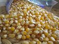 Food Grade Maize Seeds