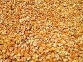 Whole Maize Seeds