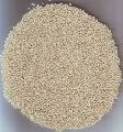 All Type Of Sesame Seeds