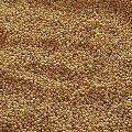 Brown Millet Seeds
