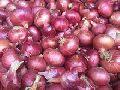 Fresh Indian Big Onion